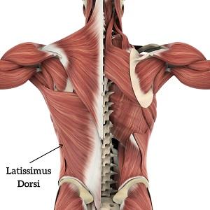 Zency lattisimus dorsi ved ondt i ryggen